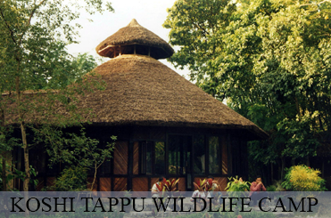 Koshi Tappu Wildlife Camp | Eco-tourism in Nepal