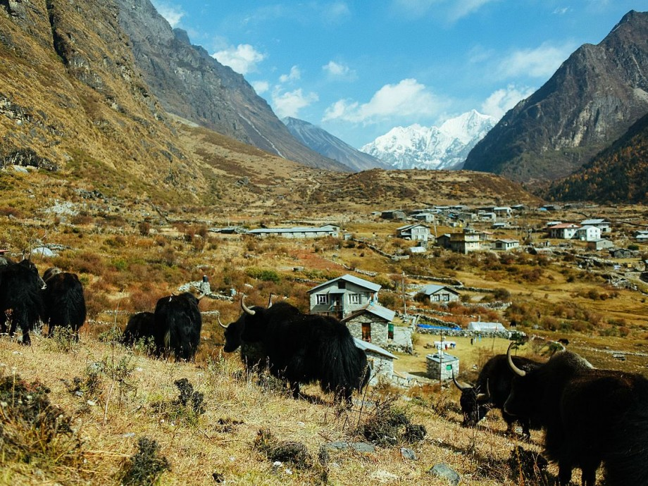 Langtang Trek | The Explore Nepal